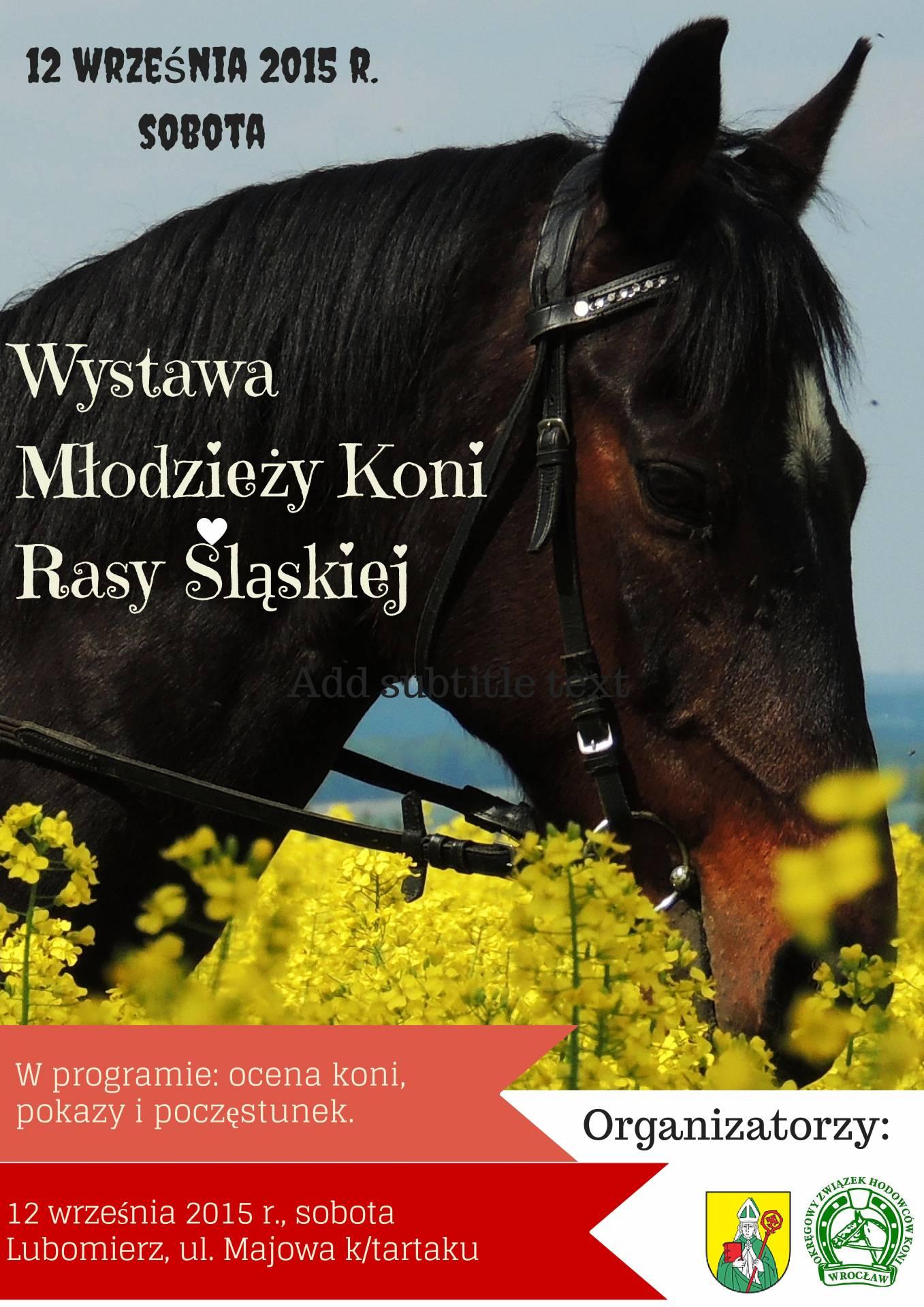 V Przegląd Młodzieży Koni Rasy Śląskiej i Konik Polski – Lubomierz