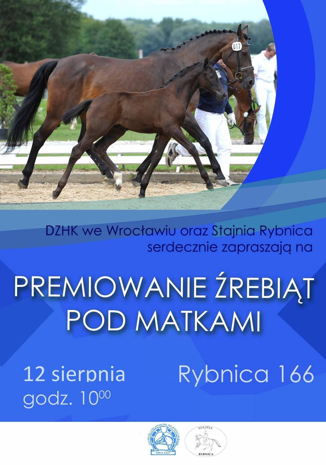 Premiowanie Źrebiąt Pod Matkami  12.08.2017 – Rybnica