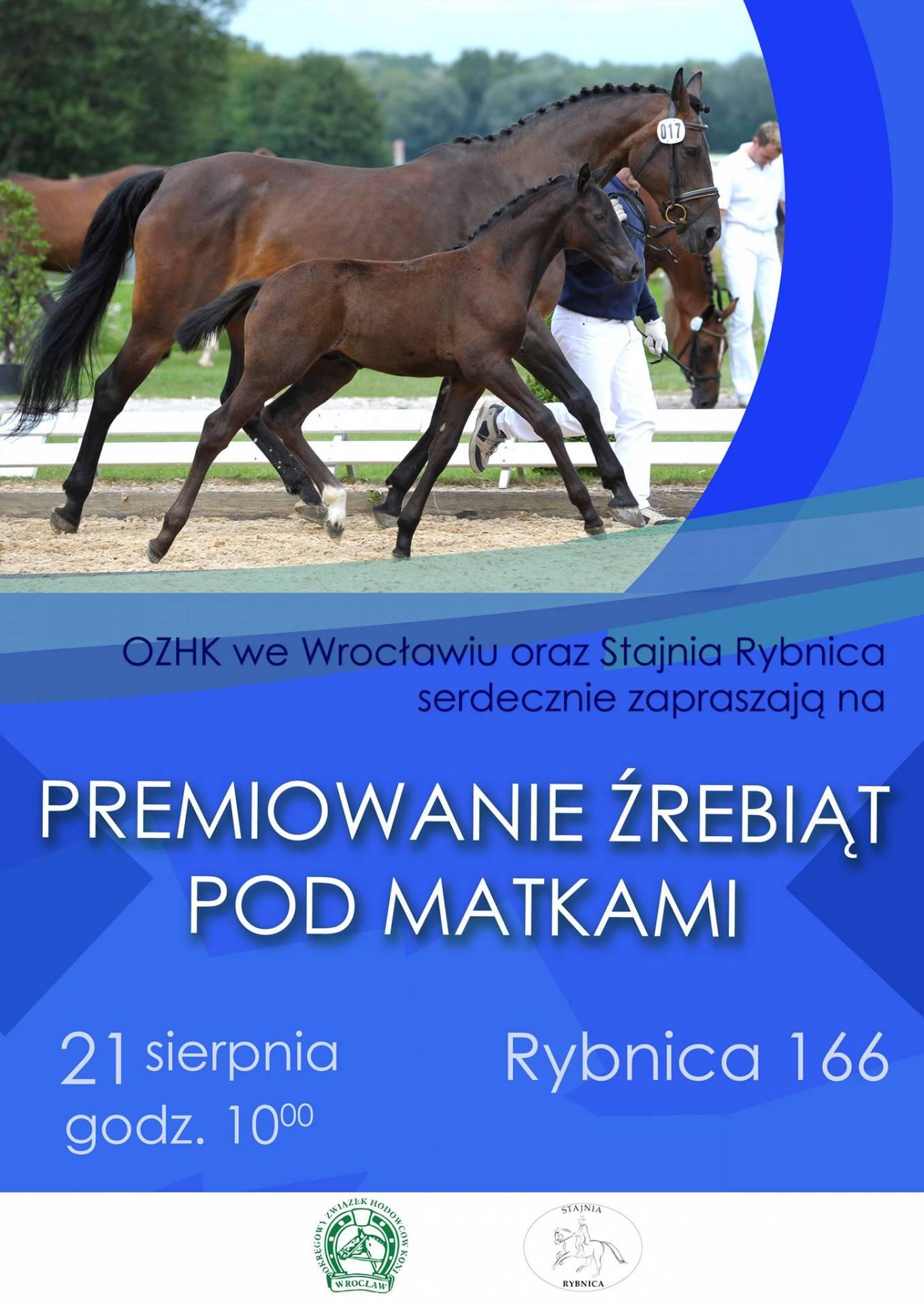 Premiowanie Źrebiąt Pod Matkami 21.08.2016 – Rybnica