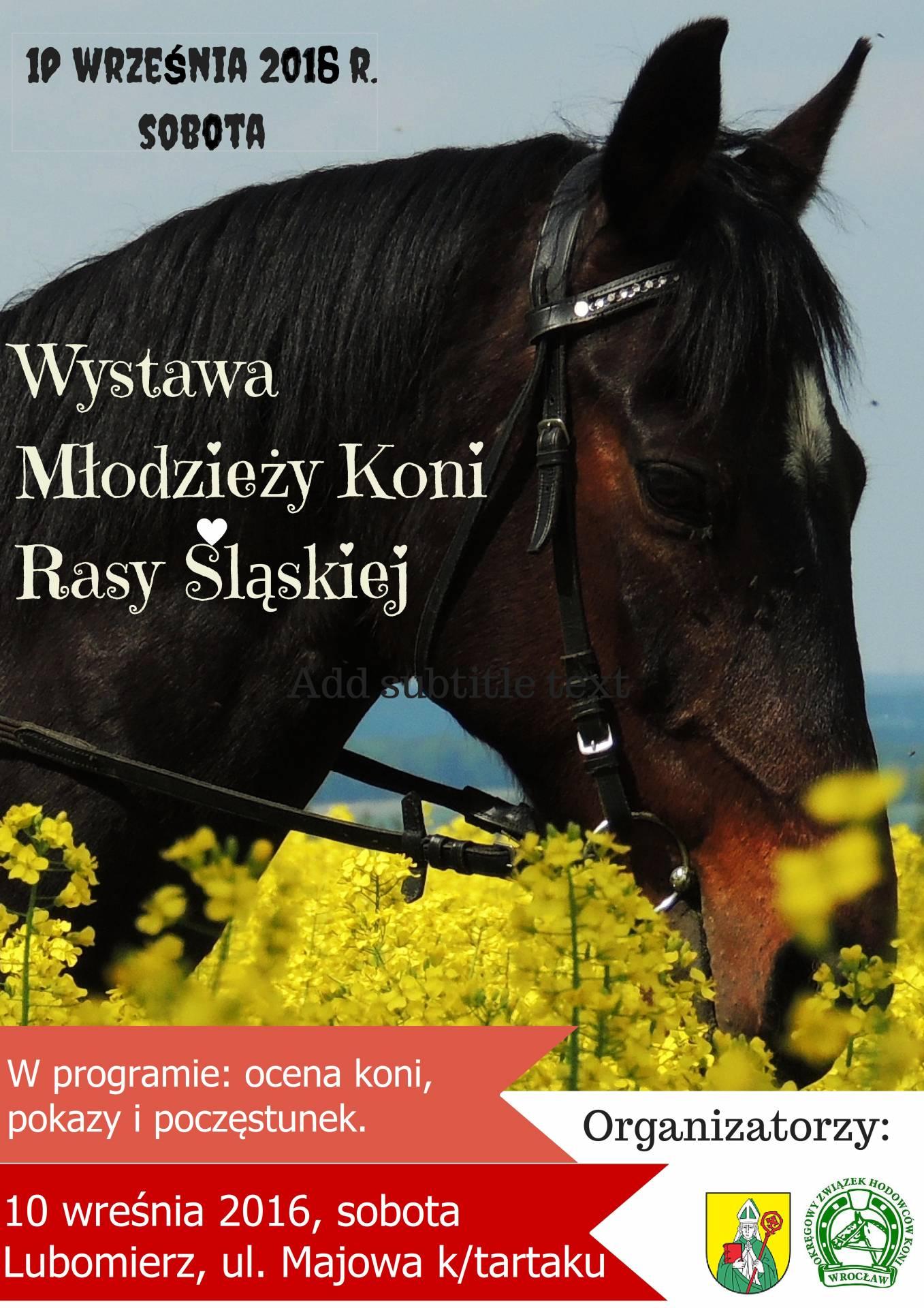 Wystawa Hodowlana Młodzieży Rasy Śląskiej – 10.09.2016 – Lubomierz
