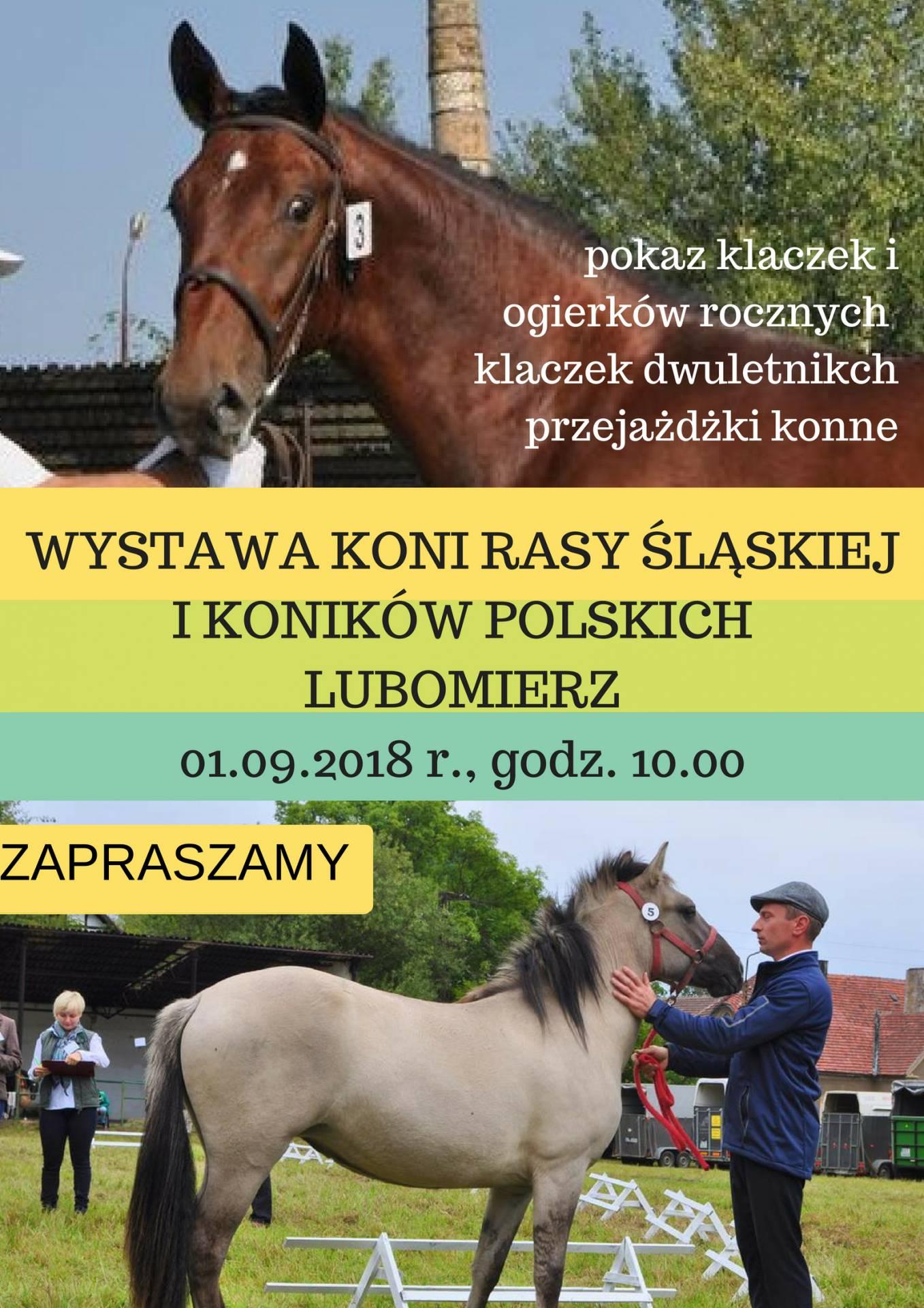 Wystawa Hodowlana Młodzieży rasy śląskiej i konik polski 1.09.2018 Lubomierz -zdj. Anna Majer
